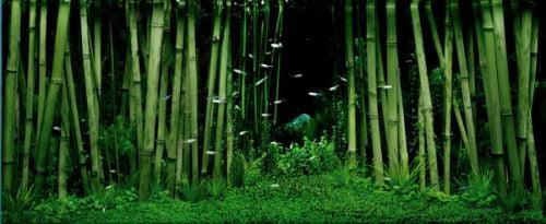Bamboo aquascape