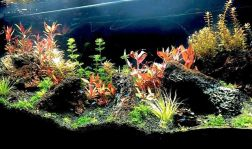 55 gallons aquarium with aquatic plants