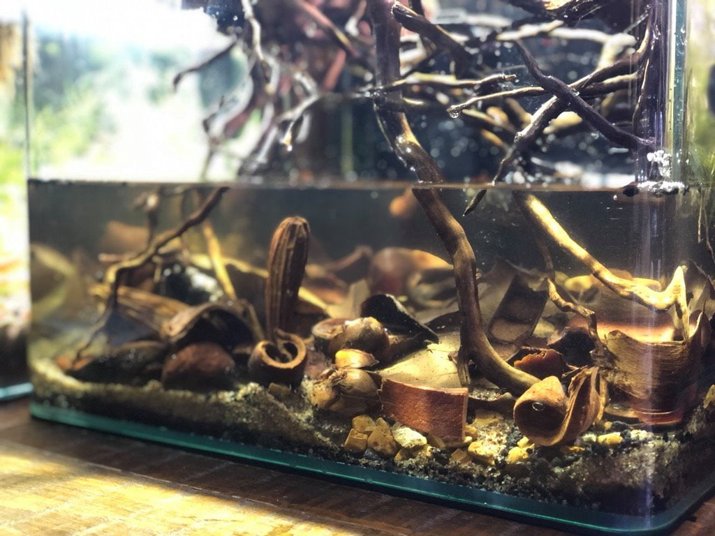 Blackwater aquarium black spider wood and botanicals - Dregea Pods, Coco Palm Bracts, Dysoxylum Pods, Mokha Pods, Kachnar Tree Pods