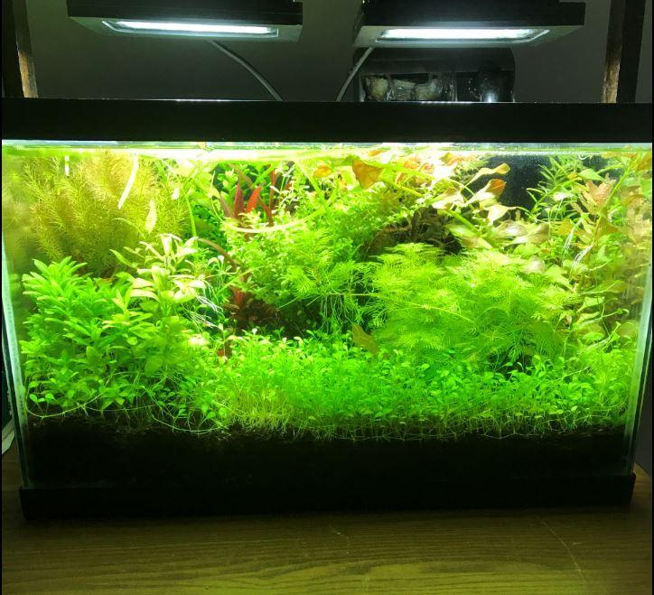 Flood light LED for aquarium plants 5gallons
