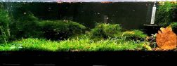 Planted shrimp aquarium with Snails