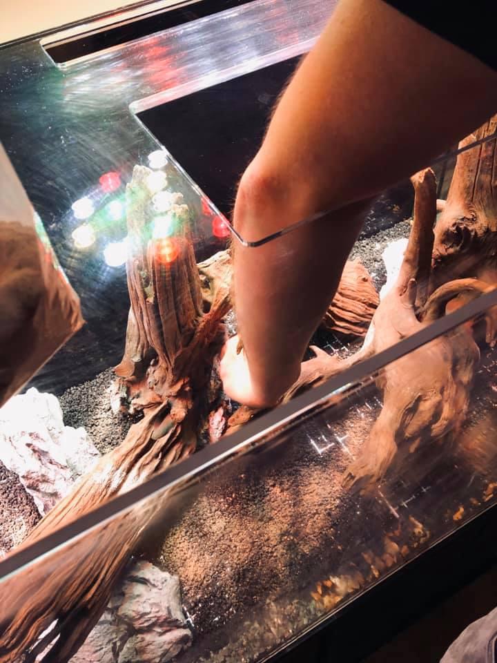 bacter AE aquarium additive