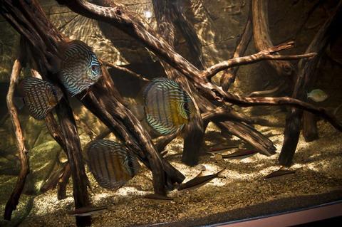 blackwater discus aquarium