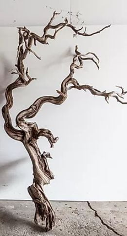 manzanita driftwood for blackwater aquarium
