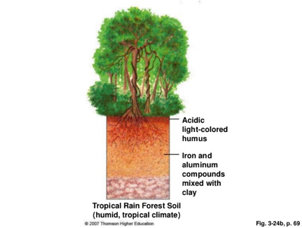 amazon forest soil layers