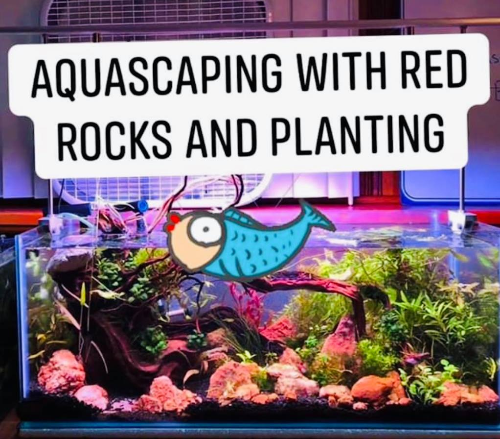 Aquascaping with the red rocks and planting – 20 g long rimless aquarium (part 2)