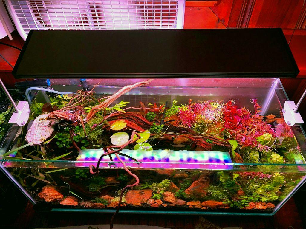 Red rocks in 20 gallon long aquascaping - setting up aquarium