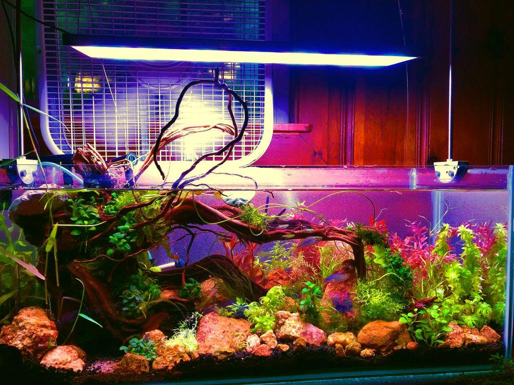 aquascaping with red rocks 20 gallons long aquarium